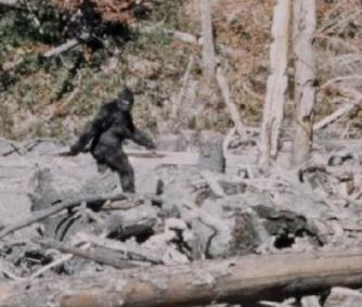 8584-911-call-bigfoot