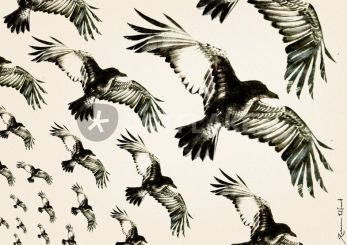 a-flock-of-ravens
